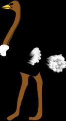 Tall Ostrich!
